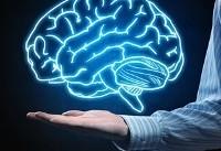 مغز با بالارفتن سن کند نمیشود