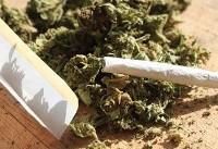 احتمال کشت «ماریجوانا» در مناطق صعبالعبور