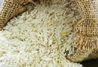 برنج داخلی نیاز ۱۰ ماه را تامین می کند/واردات در فصل دروممنوع شود