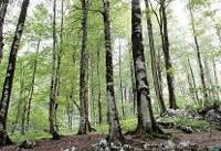 جزئیات طرح زراعت چوب/طرح استراحت جنگل نباید ناکام بماند
