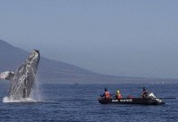 Humpback whale entangled in 285ft of rope freed by rescuers off coast of Hawaii