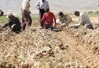 تفکیک دستمزد کارگران روستایی/ بیشترین دریافتی مردان ۲.۱ میلیون تومان