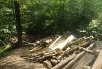 قتل&#۸۲۰۴;عام درختان هیرکانی
