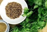 یک سبزی و این همه فایده!/ بهبود عمل گوارش و هضم غذا با مصرف یک سبزی جادویی!