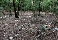 خطری دوباره برای جنگلهای شمال/