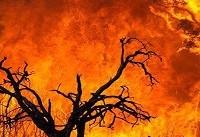 آتش سوزی در پارک جنگلی سیدنی + فیلم
