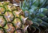کشف صدها کیلوگرم کوکائین در آناناس تازه