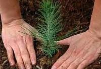 آغاز طرح نهضت درختکاری در غرب تهران