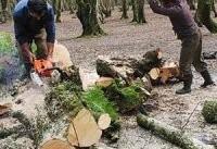 مرگ و میر دسته جمعی درختان در ایران