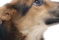 جام جهانی روسیه | پناهگاه موقت برای سگهای خیابانی