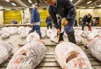 ژاپن | وداع با تسوکیجی؛ بزرگترین بازار جهانی ماهی