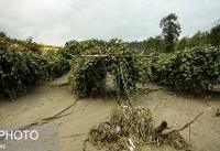 تعداد و شدت سیل در مازندران افزایش یافته است