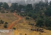 برنامه مدیریت پایدار جنگل تا یک ماه آینده آماده اجرا میشود