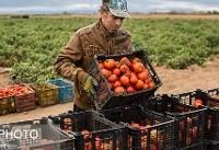 قیمت گوجه و سیبزمینی رضایت مردم را جلب نکرد + جدول قیمت