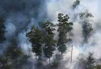 جنگلزدایی عامل تولید سالانه ۸ درصد از CO۲ جهان