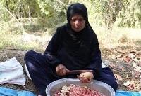 برداشت انار از باغ های خوزستان (عکس)