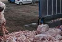 آلودگی ضایعات مرغداری&#۸۲۰۴;ها در جان حاشیه&#۸۲۰۴;نشین&#۸۲۰۴;ها
