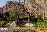 برگزاری سومین جشنواره گلهای داوودی در باغ گیاه شناسی