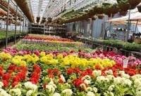 سهم ایران از بازار ۳۰ میلیارد دلاری گل منطقه تنها ۲۵ میلیون دلار است