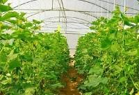 ایران در توسعه گلخانهها در رتبه اول دنیاست