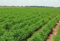 توصیههای هواشناسی کشاورزی برای روزهای پایانی پاییز