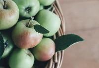 کاهش صادرات سیب ایران با گران شدن حمل و نقل