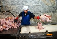 قیمت مرغ در بازار، ۲۰ درصد گرانتر از نرخ مصوب!
