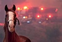 آتشسوزی مهیب کالیفرنیا؛