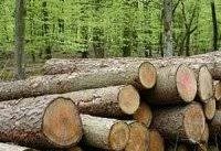قاچاق چوب با زانتیا