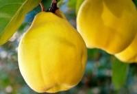 میوهای که سرخوشتان میکند