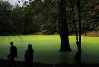 طبیعت شگفت انگیز مرداب هسل در چالوس +عکس