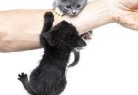 ۵ بیماری خطرناک که از گربه به انسان منتقل میشود