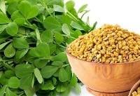 داروهای گیاهی کاهنده قند خون و وزن/ تولید پانسمان طبیعی مرهم زخم