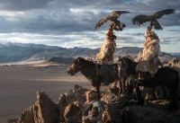 Eagle-eyed! Photographer captures stunning pictures of world's last remaining Mongolian eagle ...