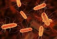 آنتیبیوتیک طبیعی برای مقابله با باکتریهای مقاوم