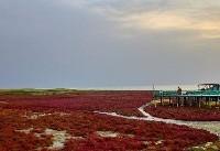 غروبی غم انگیز و تلخ در خلیج گرگان +تصاویر