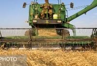 نرخهای خرید تضمینی محصولات کشاورزی بهزودی ابلاغ میشود