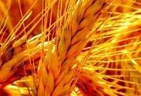 تاخیر در اعلام نرخ خرید تضمینی محصولات کشاورزی تخلف است