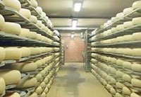 پخش موزیک برای پنیرها