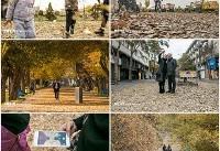 زیبایی های پاییز در خیابان های تبریز +عکس