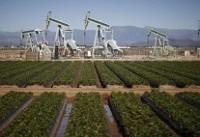 مقاومت نفت در برابر کاهش بیشتر قیمت