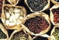 صادرات ۱۸ نوع ماده غذایی ممنوع شد + سند