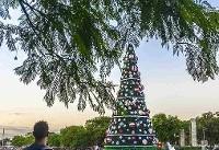 درخت کریسمس غول پیکر در سائوپائولو+عکس