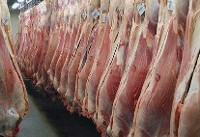 سود بازرگانی واردات گوشت صفر شد/ترخیص ۲.۵ میلیون کیلوگرم گوشت