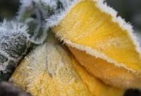 تصاویر خیره کننده از یخبندان زمستانی