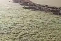 شخم زدن زمین فوتبال توسط بازیکن ناراضی ! +فیلم