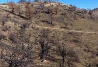 احیای عرصههای جنگلی سوخته «زرشک چال» کردکوی