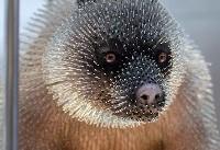تندیسهای زیبایی از حیوانات با استفاده از سوزن+عکس