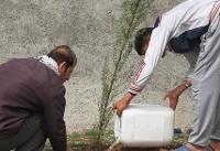 آغاز درختکاری منازل شهروندان از ١٠ دیماه