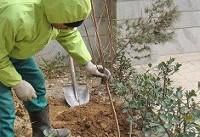 آغاز ثبتنام برای کاشت درخت در منازل شهروندان از ۱۰ دی
